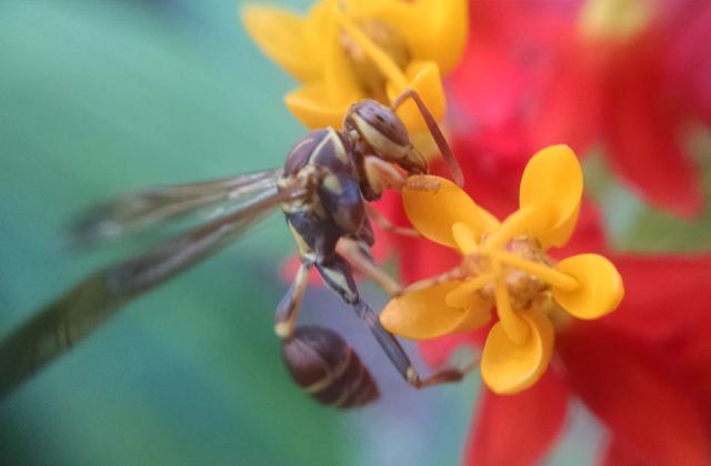 Bug and Flower Macro
